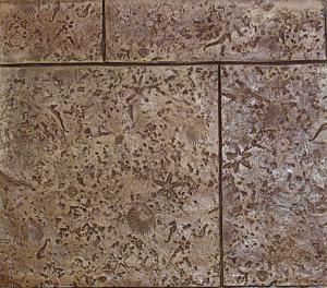 st 630 24 x 24 coquina w shells tile